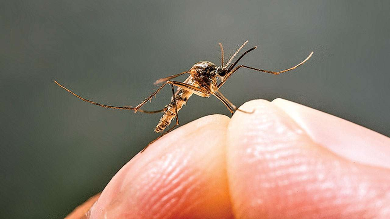 डेंगू के लक्षण व बचाव के 7 आसान तरीके,Dengue Fever Sympotms Prevention In Hindi,Dengue ke lakshan,Dengue bimari,Dengue fever kaise door kare