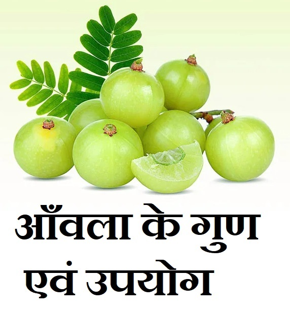 amla benifits in hindi,amla ke fayde in hindi