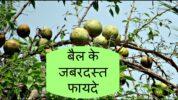 Benefits Of Bail In Hindi,Bael Benefits Types In Hindi
