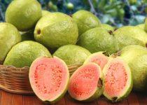 अमरूद खाने के 13 फायदे, Guava Amrud Benefits in Hindi,Amrud khane ke fayde,amrud ke beej ke fayde,Guava Benefits in healthy skin in hindi