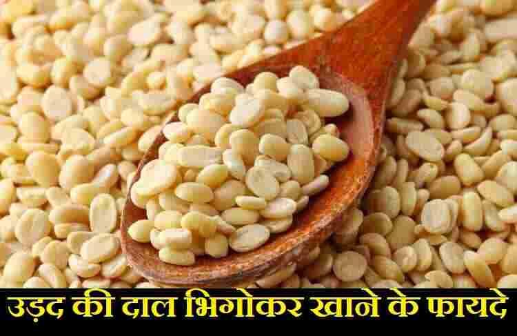 उड़द की दाल भिगोकर खाने के फायदे,Benefits of eating soaked urad dal in hindi,urad ki dal khane ke fadye,urad ki dal bhigo ke khane ke benefit