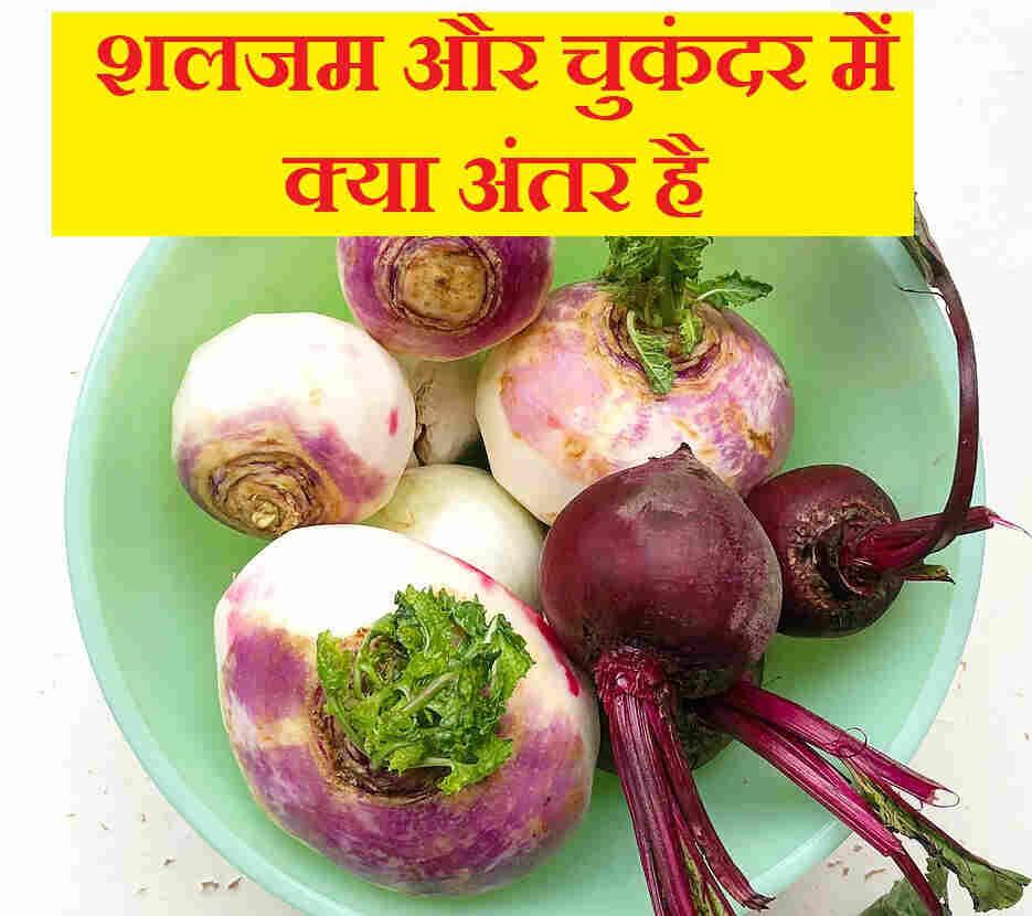 शलजम और चुकंदर में क्या अंतर है, Turnip and Beetroot difference in hindi,shalgam ke fayde,shaljam ke nuksan,shaljam chukkndar ke benefit harm