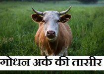 गोधन अर्क की तासीर Godhan Ark ki Tasir,Godhan Ark kya hai, Godhan Ark ke fayde, Godhan Ark ke nuksan,gau mutra benefit hindi,Godhan Ark price